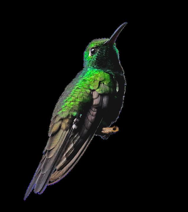 Cuba, Hummingbird, Png, Bird, Green, Nature, Small