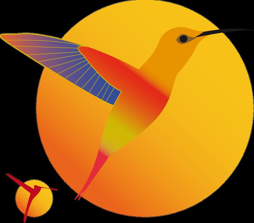 Hummingbirds, Birds, Sun, Animal, Flying