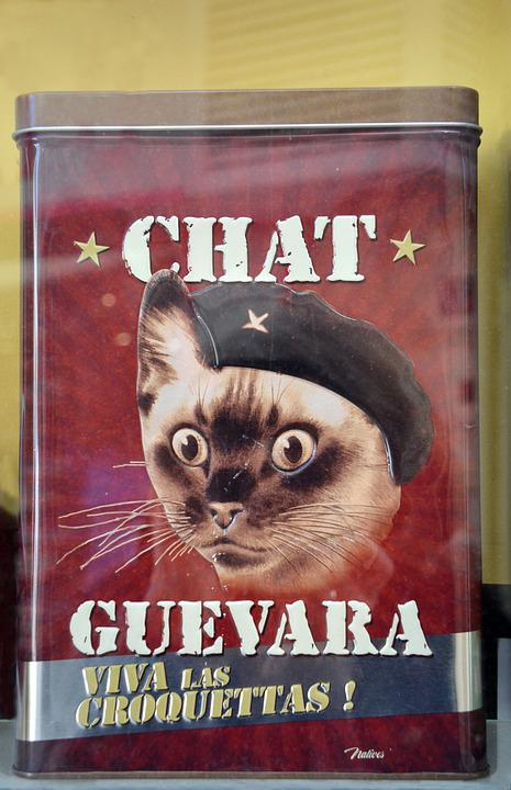 Animal, Cat Head, Box, Humor