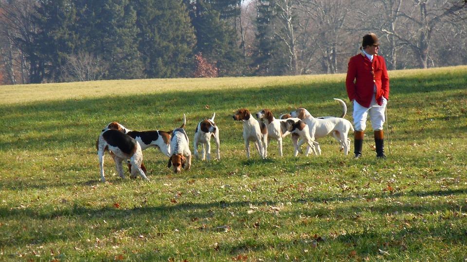 dogs_hunt