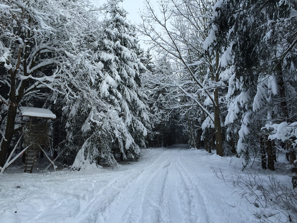 Winter Way, Forest, Hunter Was, Forest Path, Wintry