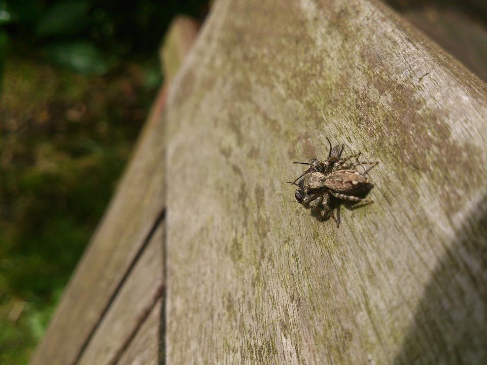 Spider, Prey, Captured, Caught, Hunting
