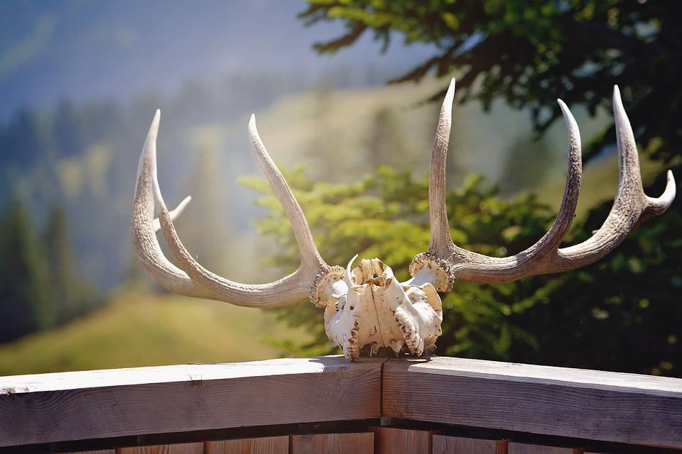 Antler, Nature, Hunting, Animal World, Wild Animals