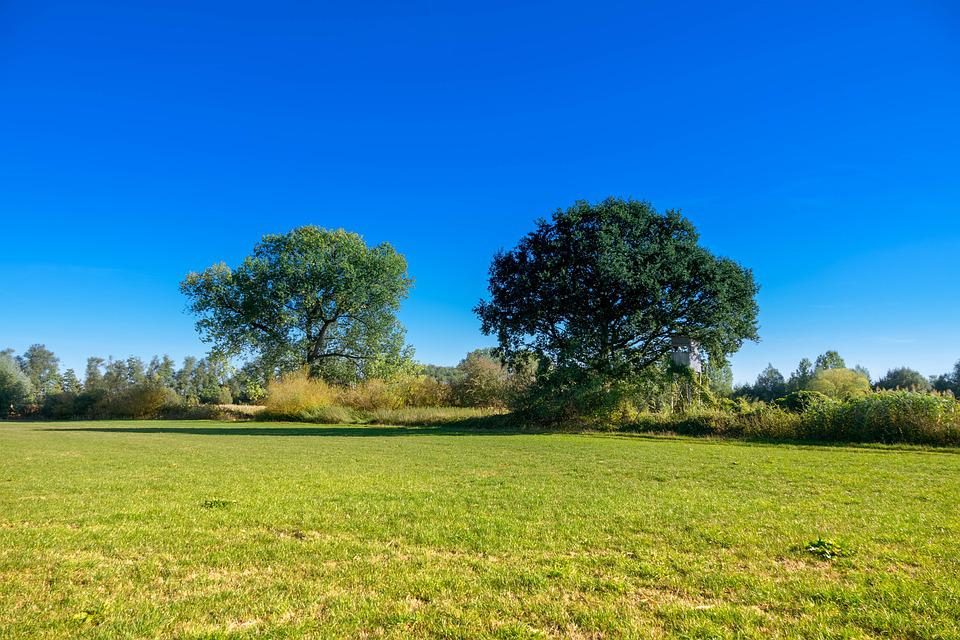 Meadow, Perch, Trees, Landscape, Nature, Hunting
