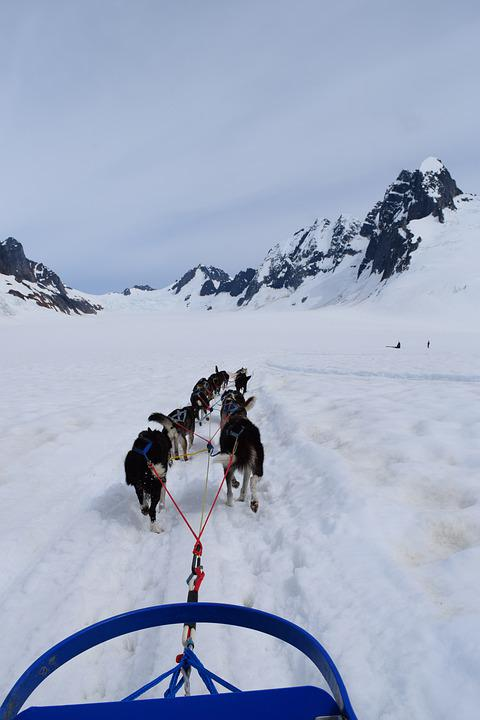 Sled, Dogs, Huskies, Teamwork, Snow, Alaska, Dogsled