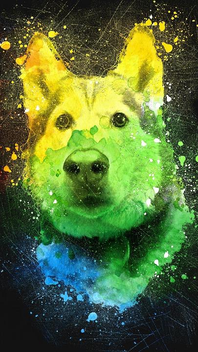 Husky, Colorful, Siberian, Pet, Dog