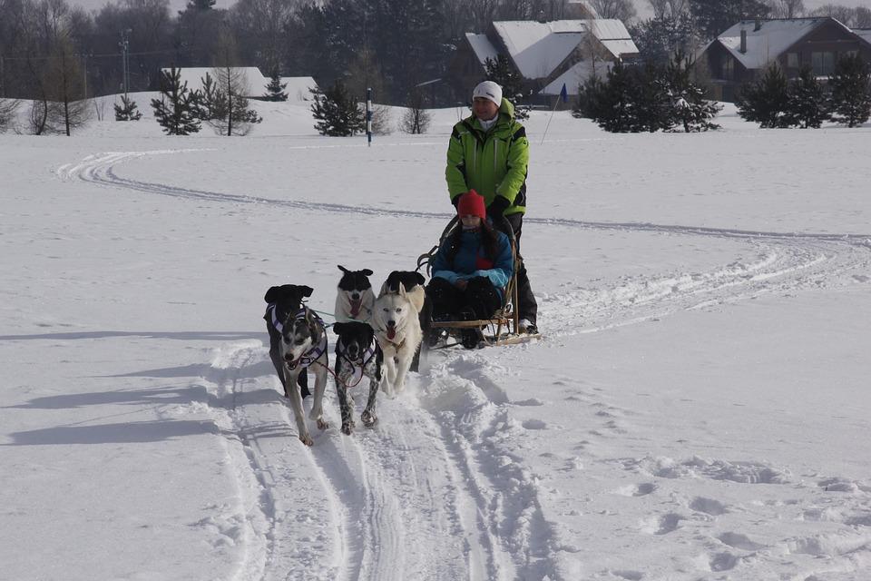 Dog, Husky, Zaprahy, Snow, Tatry, Nature, Slovakia