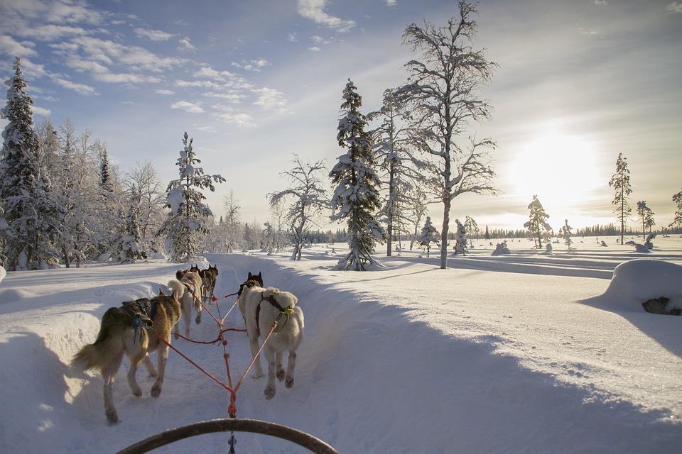 Finland, Lapland, Wintry, Husky, Snow, Snowy, Dog