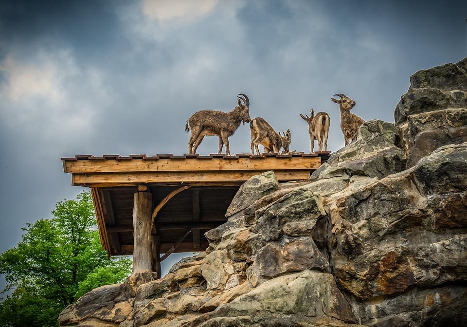 Ibex, Rock, Nature, Hut, Roof, Bock, Animal World