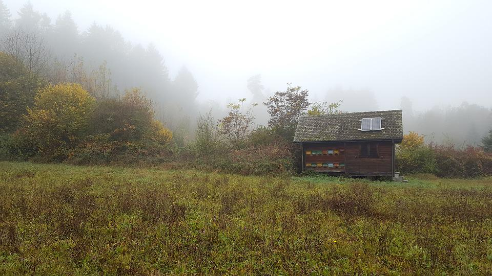Fog, Forest, Glade, Hut, Beehive, Autumn, Solar Cell