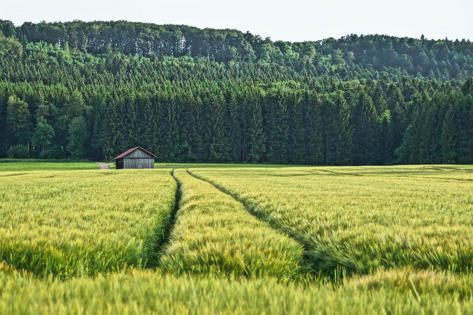 Field, Hut, Forest, Nature, Meadow, Landscape, Trees