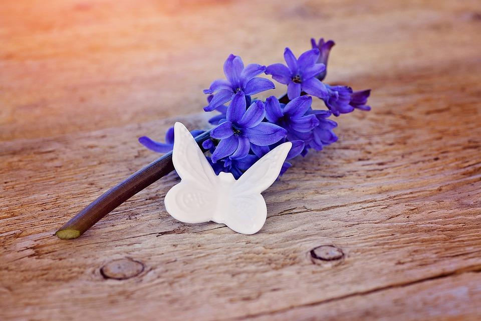Hyacinth, Flower, Blossom, Bloom, Blue, Fragrant Flower