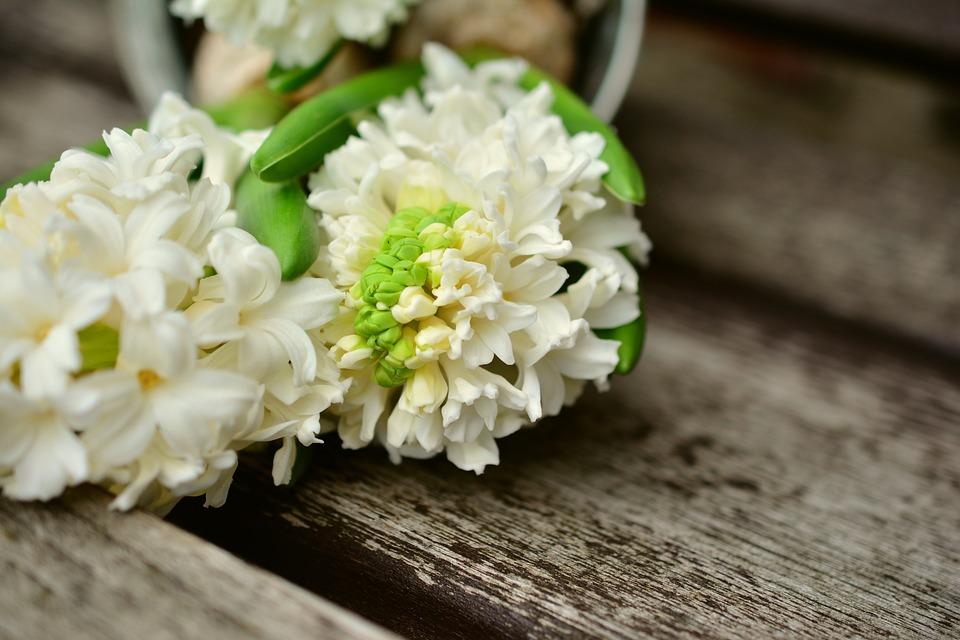 Hyacinth, White Hyacinth, Hyacinthus, Signs Of Spring