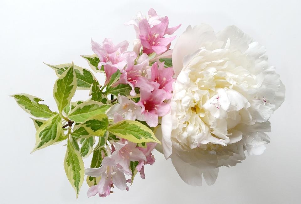 Free photo Hydrangea Flowers Flower Bouquet Nature - Max Pixel