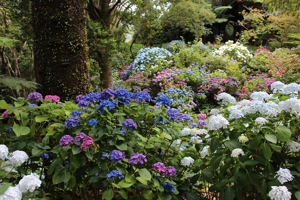 Hydrangea, Forest Floor, Forest, Flowers, Blossom