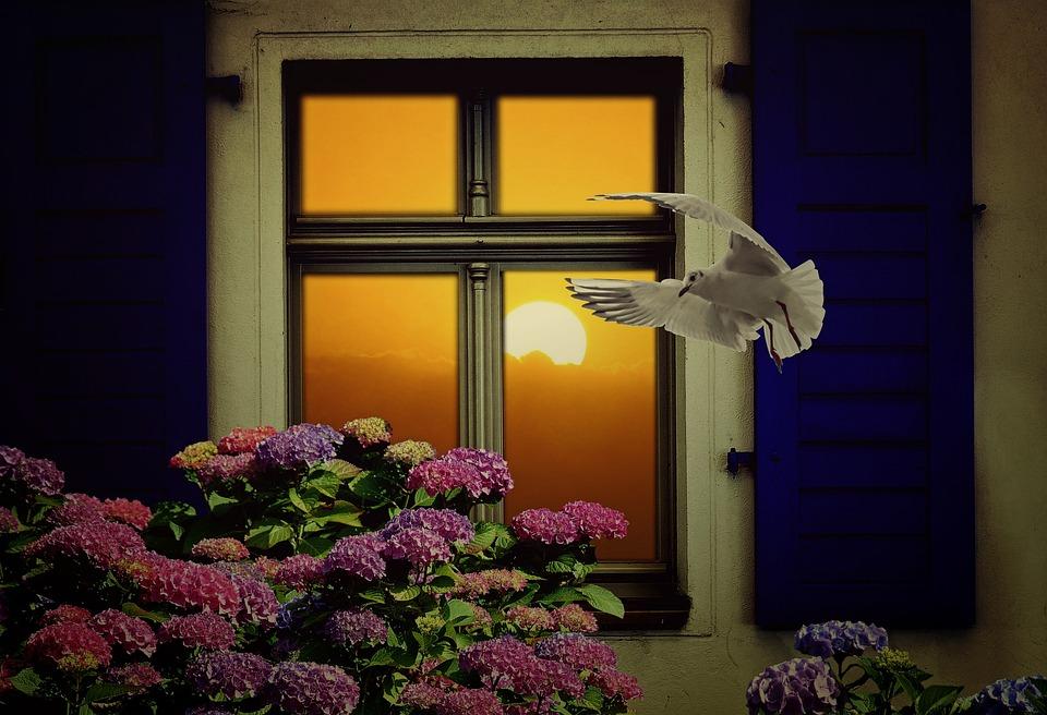 Window, Sun, Still Life, Decorative, Hydrangea, Seagull