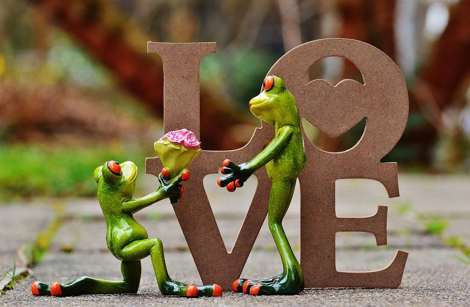 I Beg Your Pardon, Marriage Proposal, Excuse Me, Frog