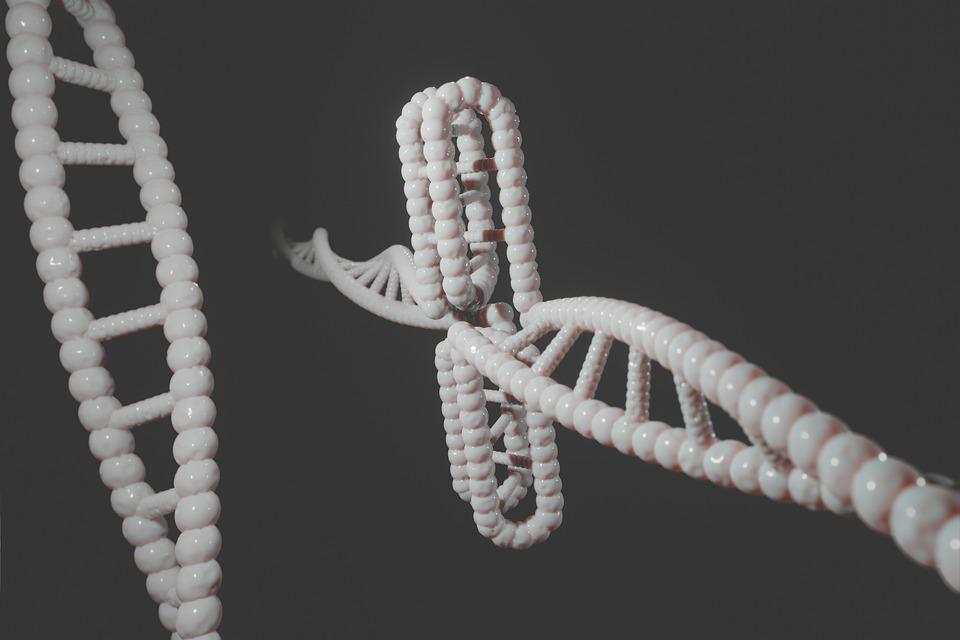 Human, Dna, Genetic, Cytosine, I-motif, I-tetraplex