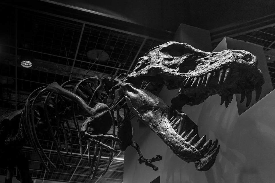 Monochrome, Black And White, Dinosaur, Ibaraki