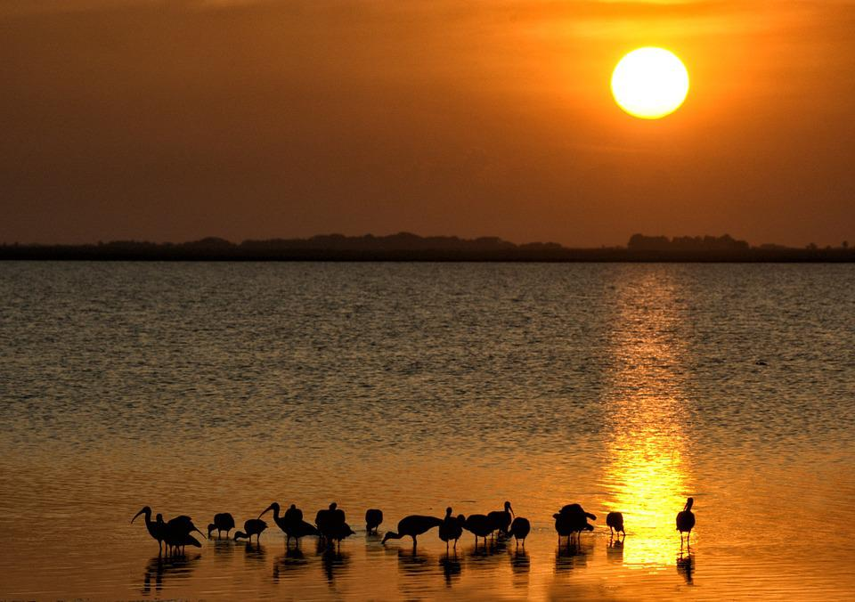 Ibis, Sunset, Beach, Sea, Horizon, Reflections, Sun