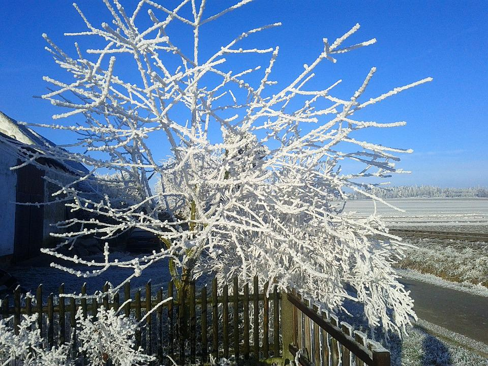Frost, Hoarfrost, Cold, Branches, Frozen, Tree, Ice