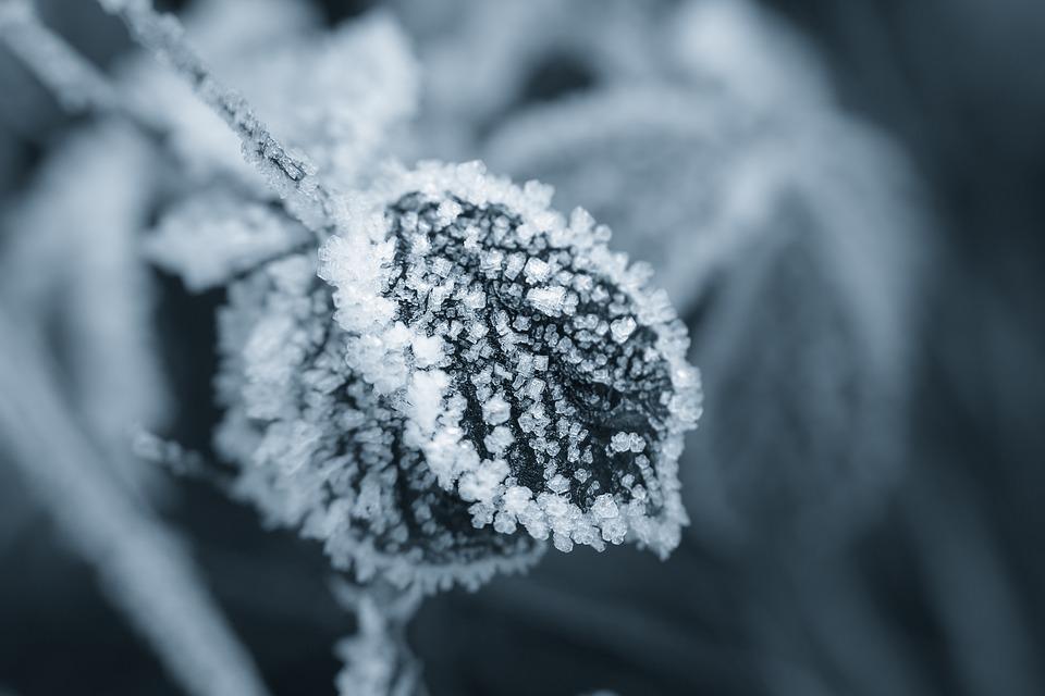 Ice, Eiskristalle, Winter, Crystals, Leaf, Frost, Cold