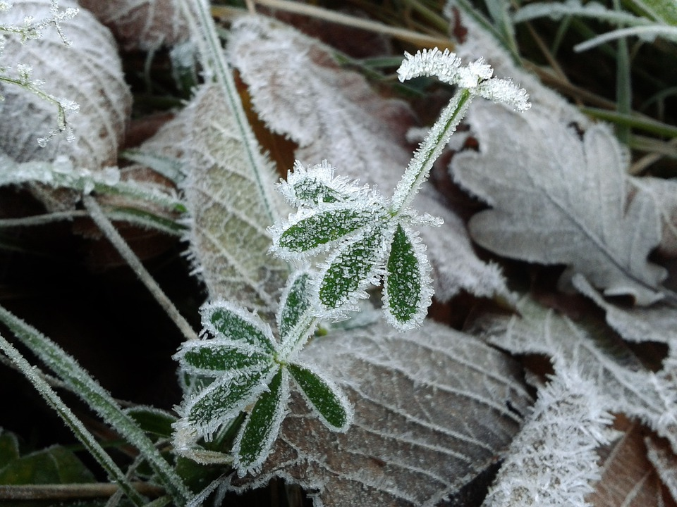 Frost, Hoarfrost, Cold, Winter, Frozen, Ice Crystal