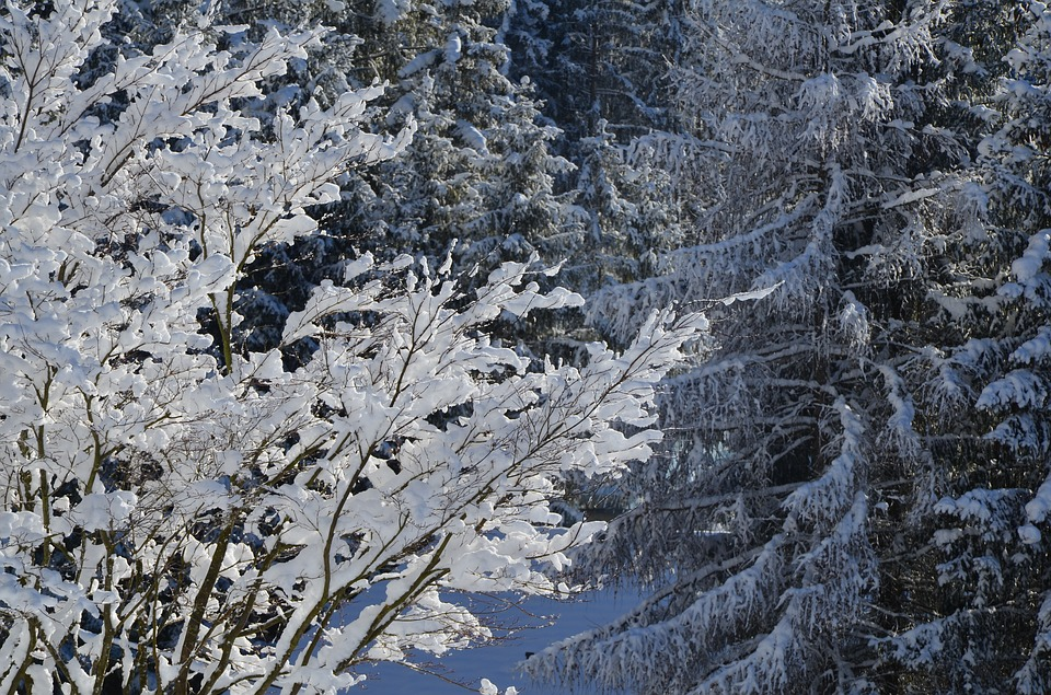 Ice, Snow, Winter, Cold, Frost, Frozen, Nature