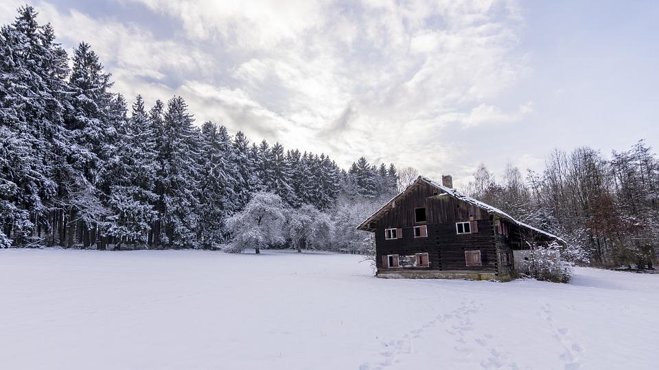 Snow, Winter, Cold, Frost, Wood, Frozen, Ice, Season