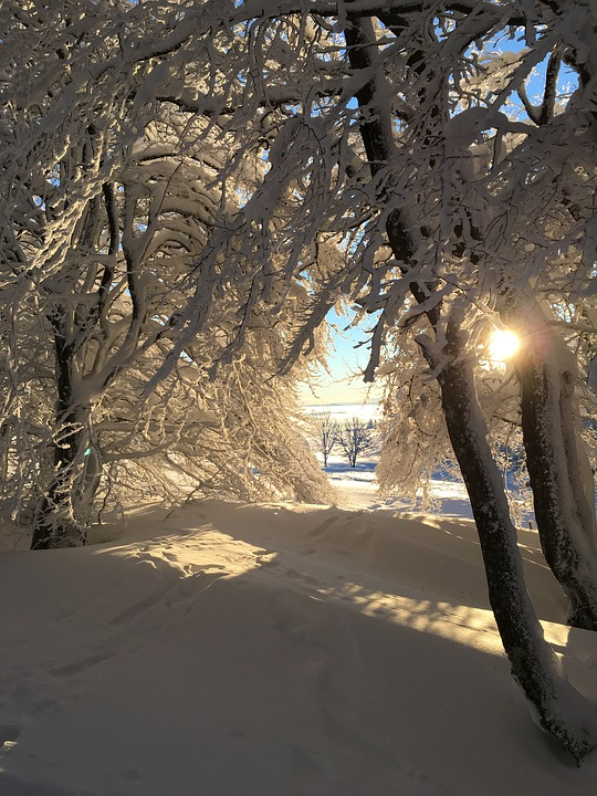 Winter, Snow, Forest, Tree, Ice