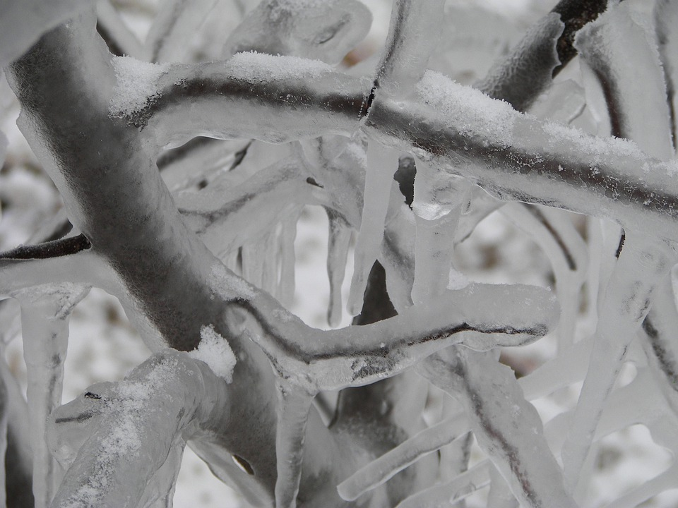 Frozen, Ice Storm, Branches, Ice, Winter, Cold
