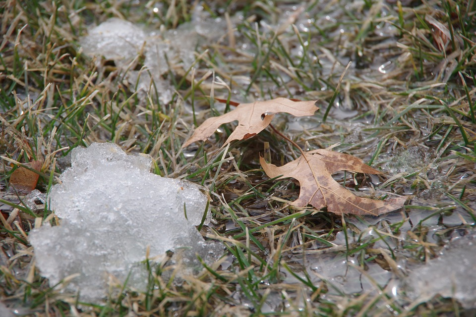 Snow, Melt, Spring, Leaves, Water, Ice