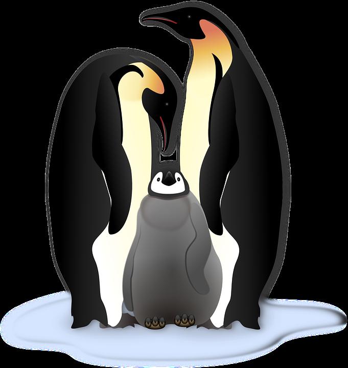 Penguin, Animal, Bird, Cold, Family, Ice, Winter