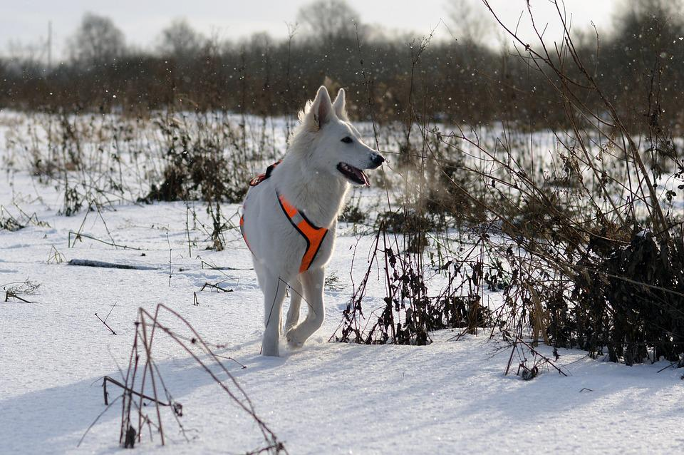 Snow, Winter, Cold, Ice, Outdoors, Dog