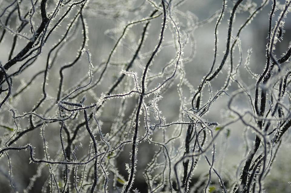 Ice, Hoarfrost, Winter, Branches, Aesthetic, Frost