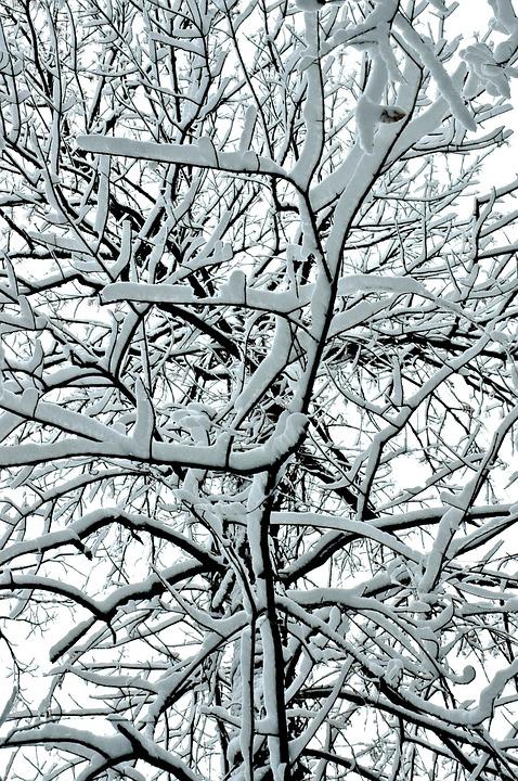 Ice, Snow, Winter, Frozen, Tree