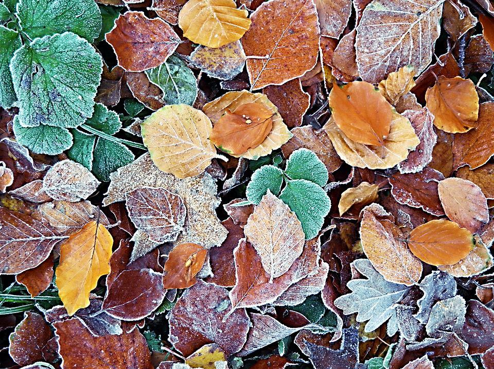 Icy Autumn Leaves, Leaves, Frozen, Nature, Iced