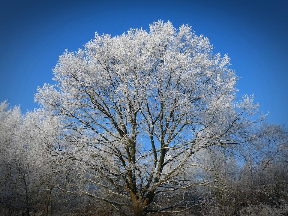 Winter, Frost, Winter Magic, Frozen, Nature, Iced, Sky