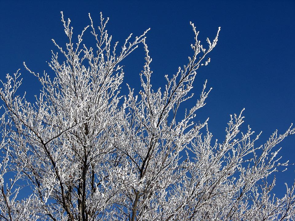 Icing, Trees, The Sky, Winter, Nature
