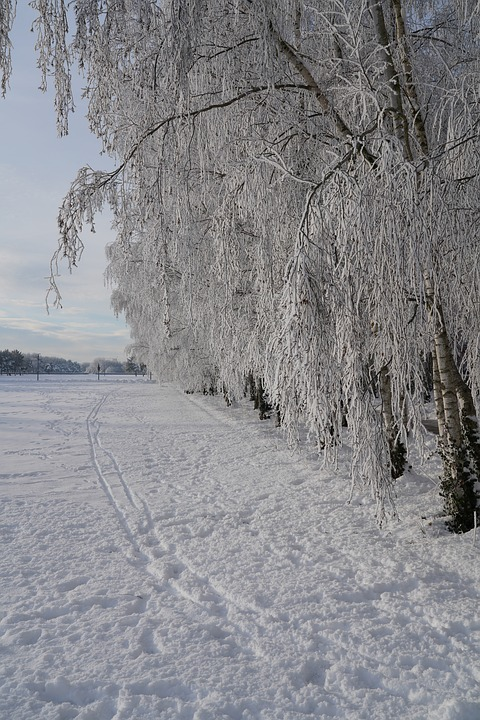 Frost, Icy, Winter, Cold, Icy Cristals