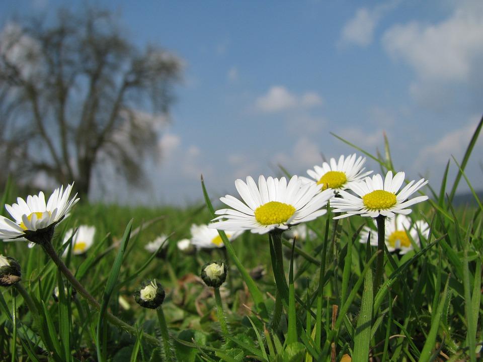 Wild Flowers, Margaret, Field, Idyll