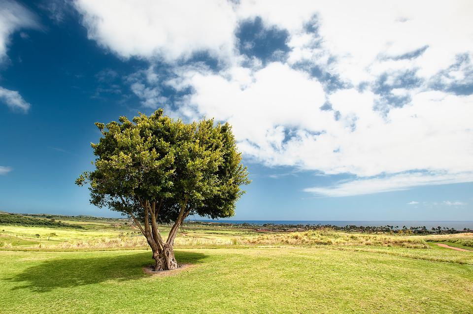 Countryside, Tree, Field, Grass, Idyllic, Landscape