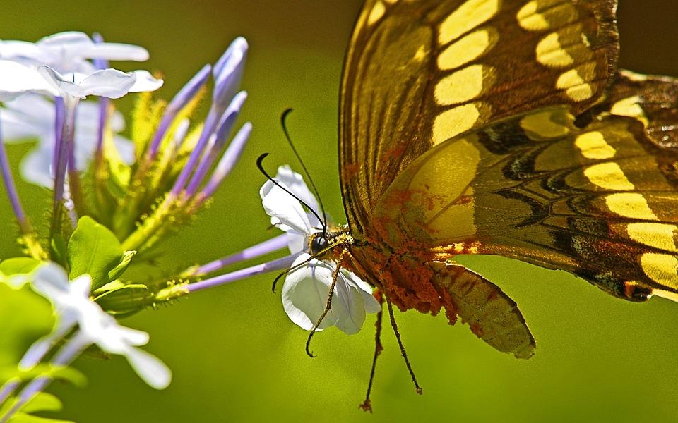 Butterfly, Brazil, Iguacu, Jungle, Flower, Pretty
