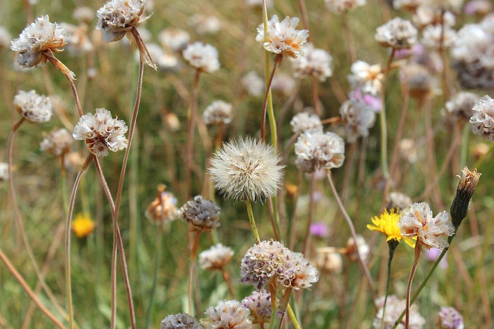Wild Flowers, Ile, Brittany, Summer
