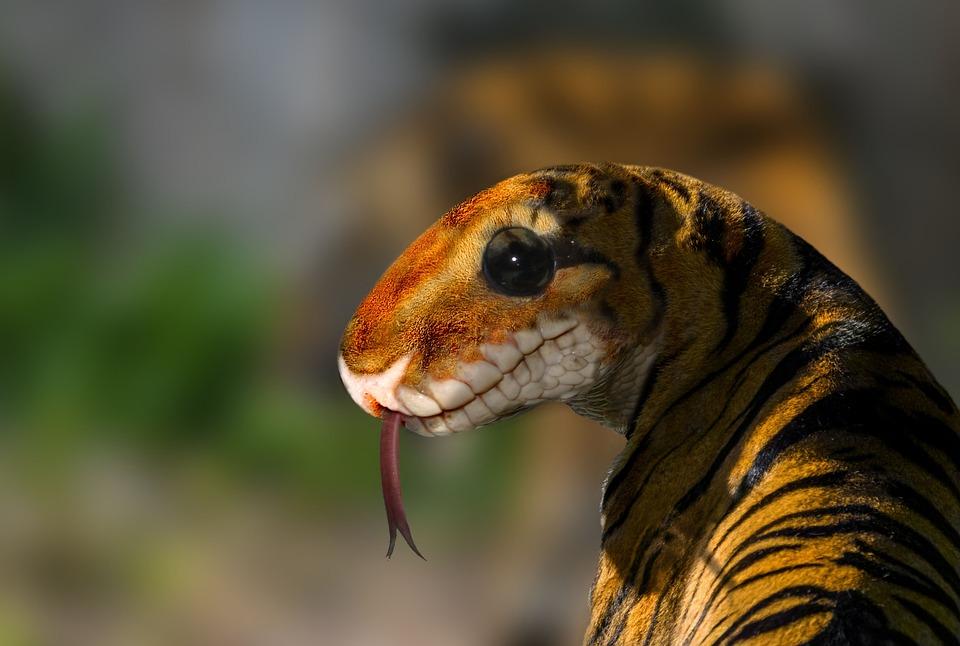 Digiart, Photomontage, Composing, Image Editing, Tiger