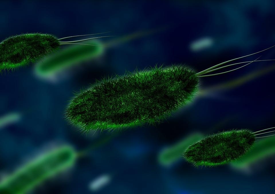 Bacteria, Bacterial Species, Imitation, Aureus