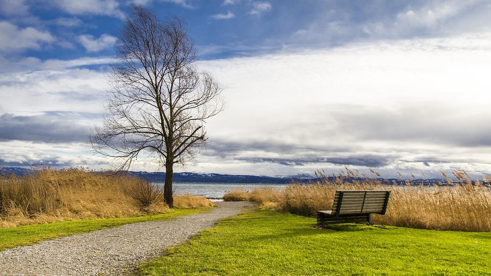 Lake Constance, Seat, Immenstaad Nature, Grass