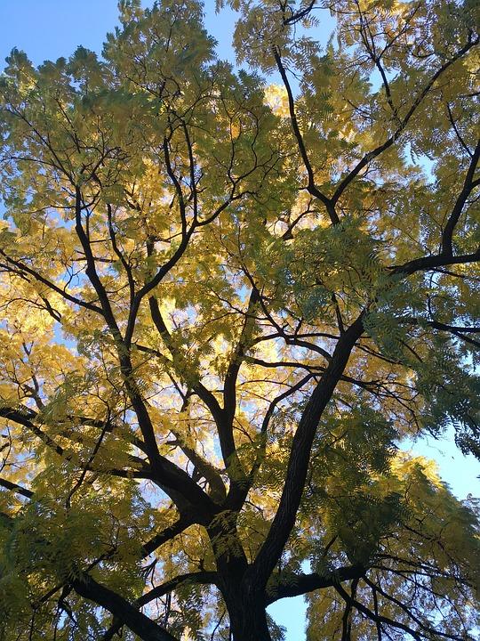 Impressions, Morning Sun, Tree