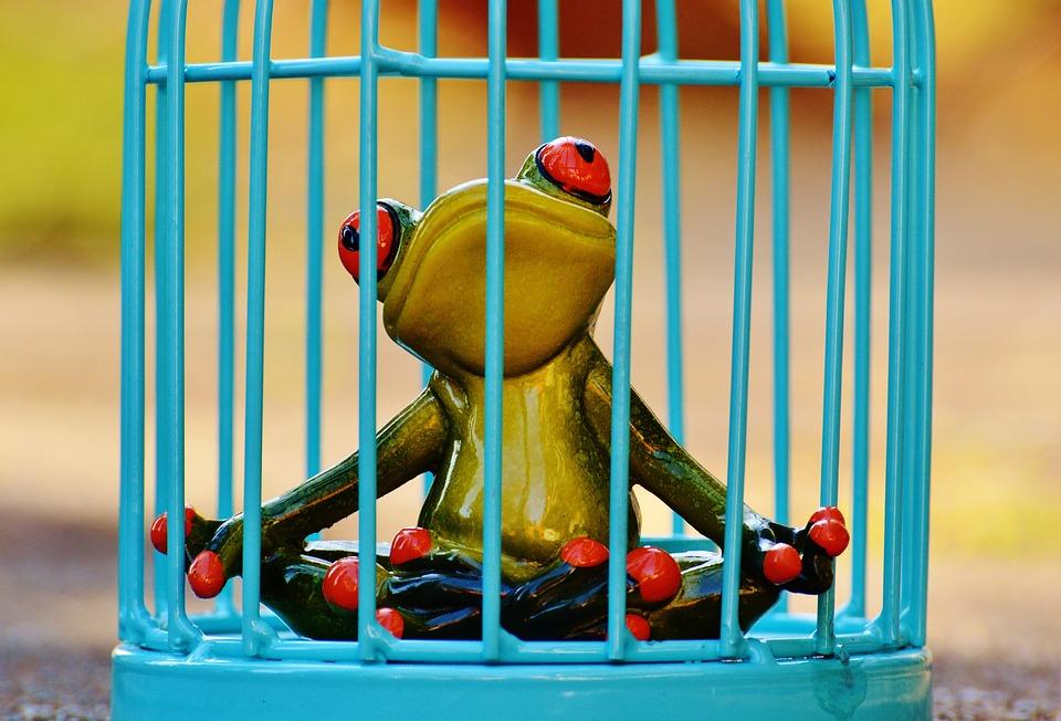 Frog, Cage, Imprisoned, Sad, Fig, Funny, Cute, Caught