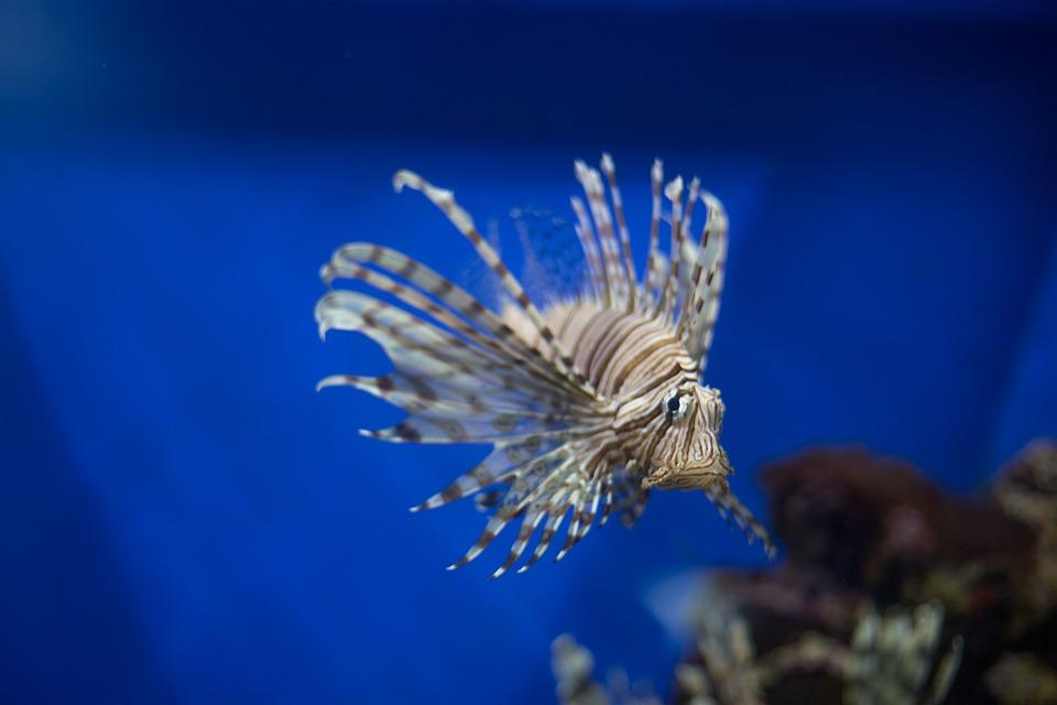 Fish, In Aquarium, Moscow, Aquarium, Vndh, Russia